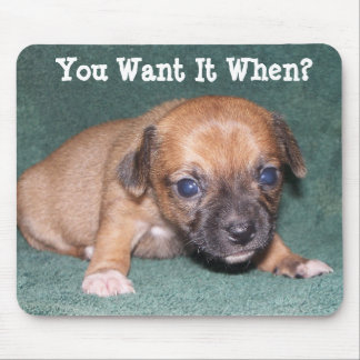 Add Your Own Words - Chihuahua Mousepad