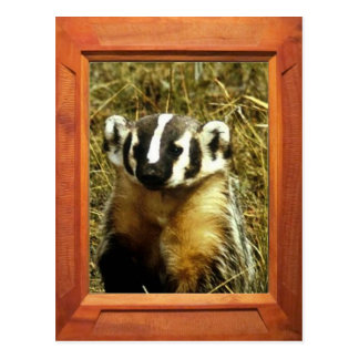 Add your photo badger postcards