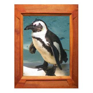 Add your photo Penguin Postcard