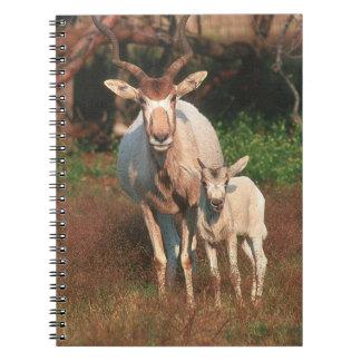 Addax/antílope blanco/antílope de Screwhorne Note Book