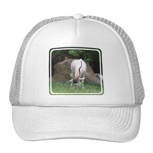 Addax Baseball Hat