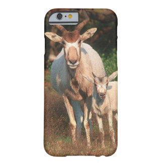Addax / White Antelope / Screwhorne Antelope Barely There iPhone 6 Case