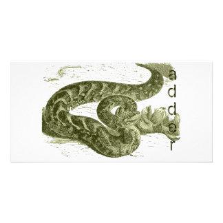 Adder (snake) photo cards
