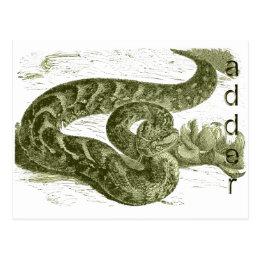 Adder (snake) postcard
