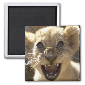 Addo Elephant National Park, Eastern Cape 2 Inch Square Magnet