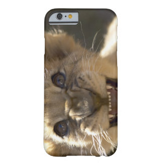 Addo Elephant National Park, Eastern Cape Barely There iPhone 6 Case