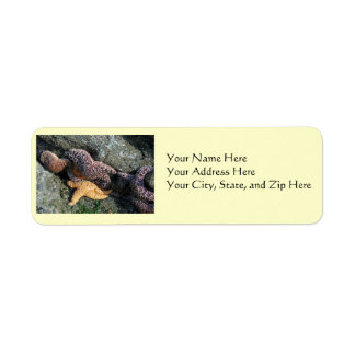 Address Labels:  Starfish Label