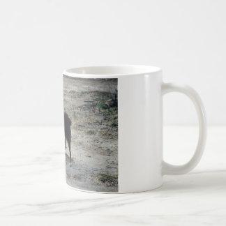 Adelantado satisfaga taza de café