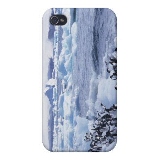 Adeliae del Pygoscelis de los pingüinos de Adelie) iPhone 4 Carcasas