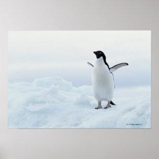 Adelie penguin, Antarctica Poster