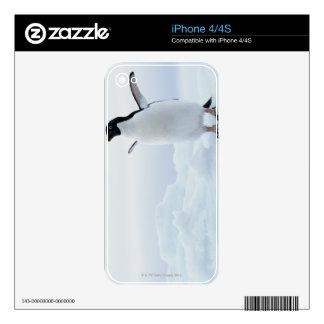 Adelie penguin, Antarctica Skin For The iPhone 4