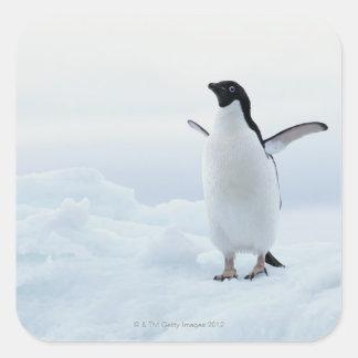 Adelie penguin, Antarctica Square Sticker