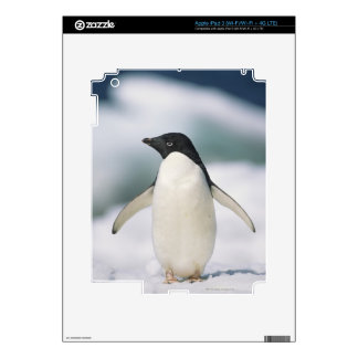 Adelie penguin, close-up iPad 3 decals
