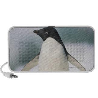 Adelie penguin, close-up mp3 speaker
