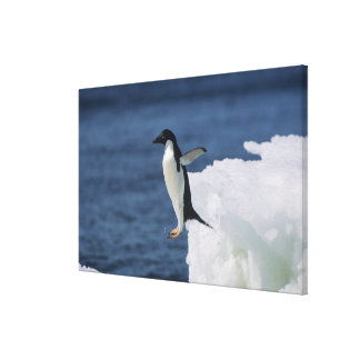 Adelie penguin leaping from iceberg canvas print