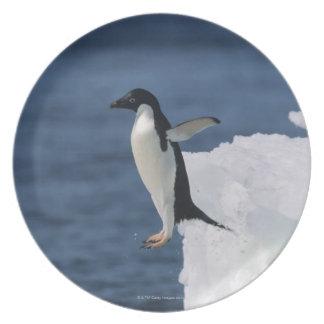 Adelie penguin leaping from iceberg plate