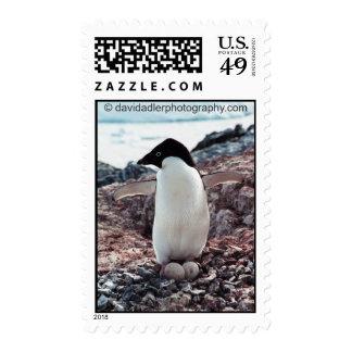 Adelie Penguin Nest Postage Stamp