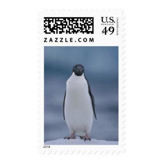 Adelie Penguin on Ice Postage
