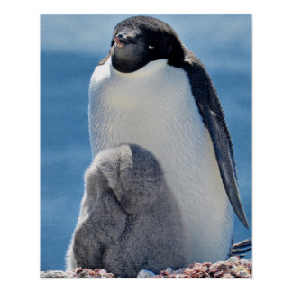 Adelie Penguin Parent and Chick Poster