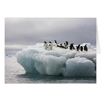 Adelie Penguin Pygoscelis adeliae), Card