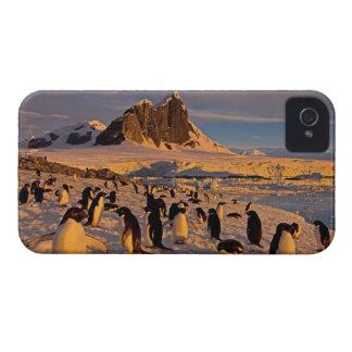 adelie penguin, Pygoscelis Adeliae, colony along Case-Mate iPhone 4 Cases