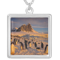 adelie penguin, Pygoscelis Adeliae, colony along Silver Plated Necklace