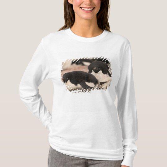Adelie Penguin, Pygoscelis adeliae, on nesting T-Shirt