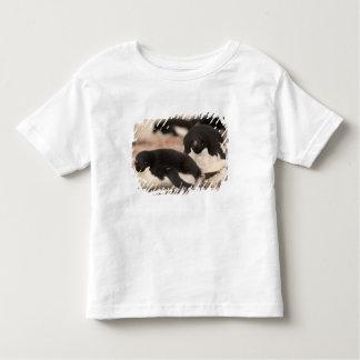Adelie Penguin, Pygoscelis adeliae, on nesting Toddler T-shirt