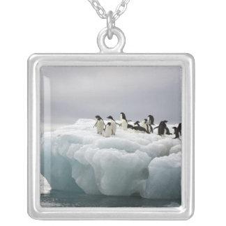 Adelie Penguin Pygoscelis adeliae), Square Pendant Necklace