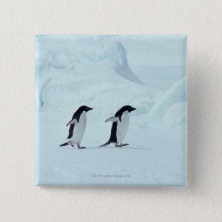 Adelie Penguins, Antarctica Button