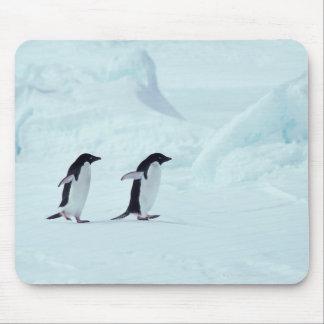 Adelie Penguins, Antarctica Mouse Pad