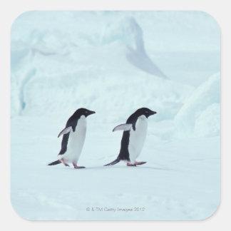 Adelie Penguins, Antarctica Square Sticker