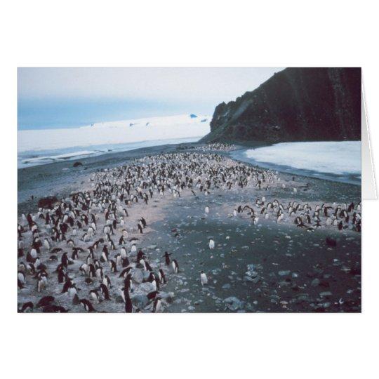 Adelie Penguins Card