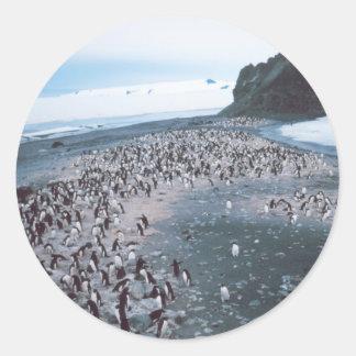 Adelie Penguins Classic Round Sticker