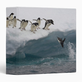 Adelie Penguins diving into sea Paulette 3 Ring Binder