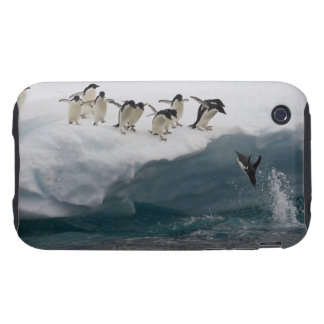 Adelie Penguins diving into sea Paulette iPhone 3 Tough Cover