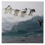 "Adelie Penguins diving into sea Paulette Ceramic Tile<br><div class=""desc"">Adelie Penguins diving into the sea Paulette Is   Darrell Gulin   AssetID: 83408383</div>"