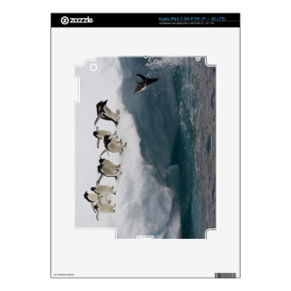 Adelie Penguins diving into sea Paulette Skins For iPad 3