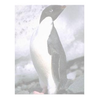 Adelie Penguins Letterhead