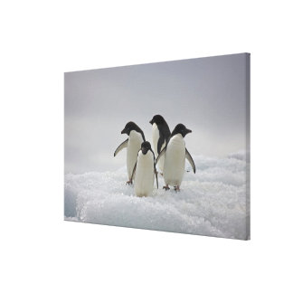 Adelie Penguins on Ice Flows Canvas Print