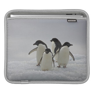 Adelie Penguins on Ice Flows Sleeve For iPads