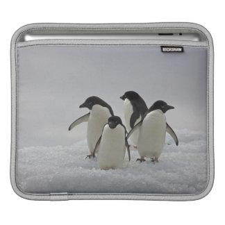 Adelie Penguins on Ice Flows iPad Sleeve