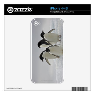 Adelie Penguins on Ice Flows iPhone 4 Skins