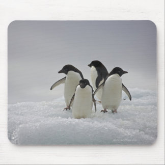 Adelie Penguins on Ice Flows Mouse Pad