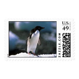 Adelie Penguins Postage Stamp