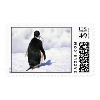 Adelie Penguins Postage