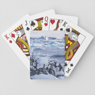Adelie Penguins Pygoscelis adeliae) among the Deck Of Cards