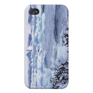 Adelie Penguins Pygoscelis adeliae) among the iPhone 4/4S Covers