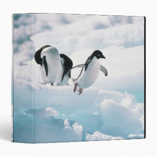 Adelie penguins (pygoscelis adeliae) Antarctica 3 Ring Binder