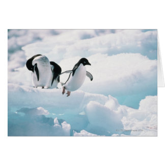 Adelie penguins (pygoscelis adeliae) Antarctica Card